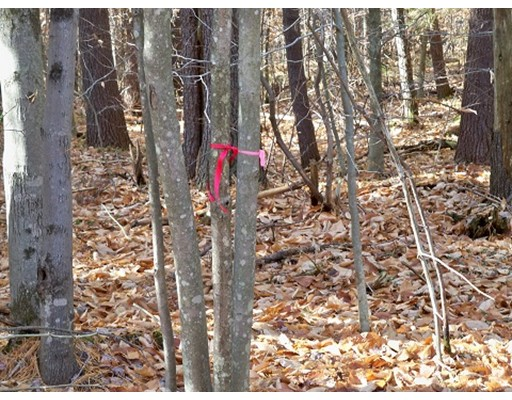 Lot 00 Curtis Hall Road, Blandford, MA 01008