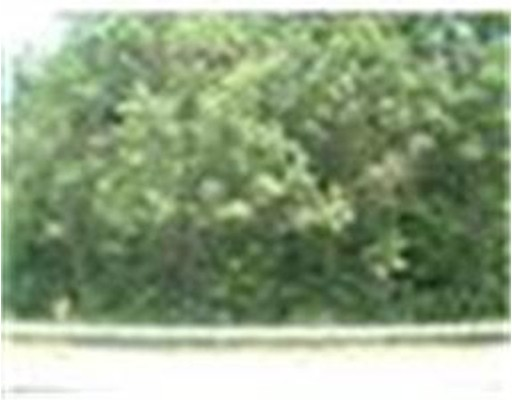 0 Cedar Street Rear, Milford, MA, 01757