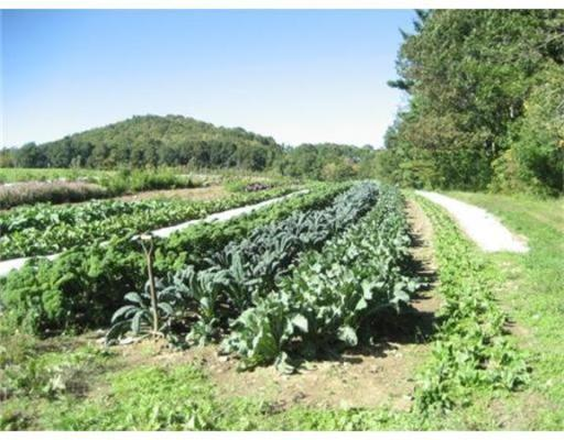 Land for Sale at 137 Beldingville Road Ashfield, Massachusetts 01330 United States