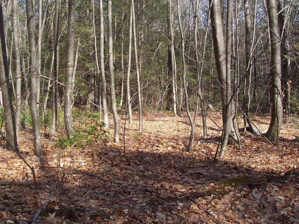 Property for sale at Lot A Shutesbury Rd, New Salem,  MA 01355