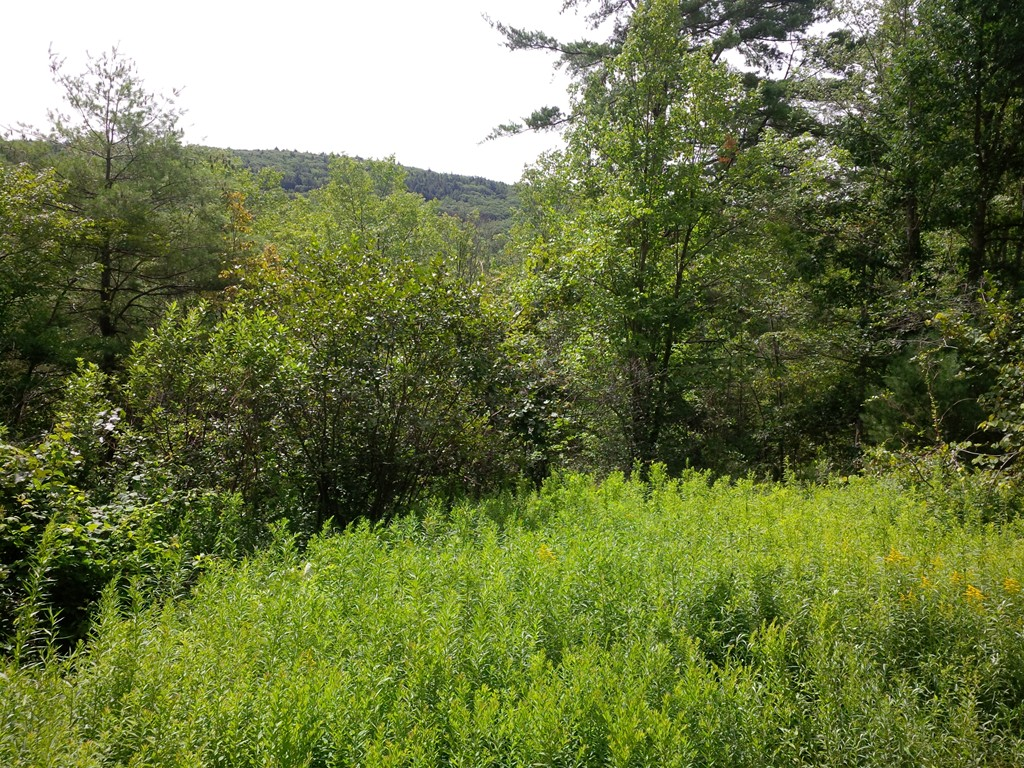 Property for sale at 0 Old State Rd, Erving,  MA 01344