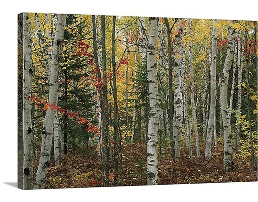 Land for Sale at 711 Massachusetts Avenue Lunenburg, 01462 United States