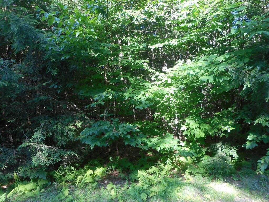 Photo of Lot 40.6 Stoney Brook Rd Becket MA 01223