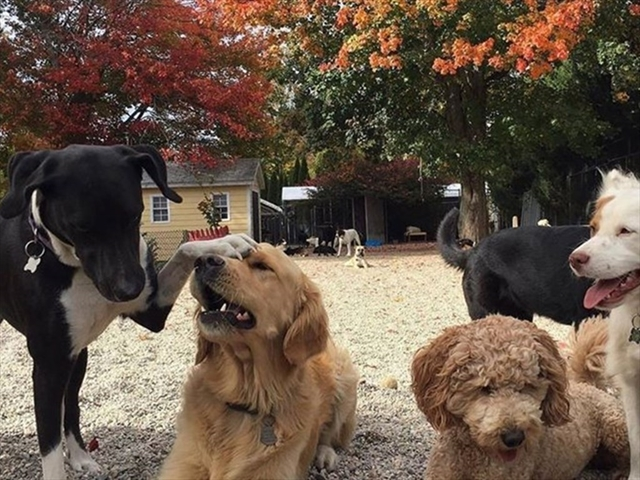 123 Dog Day Care Way Beverly MA 01915