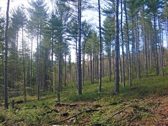 0 Middle Road Lot 2, Hawley, MA<br>$45,000.00<br>5.3 Acres, Bedrooms